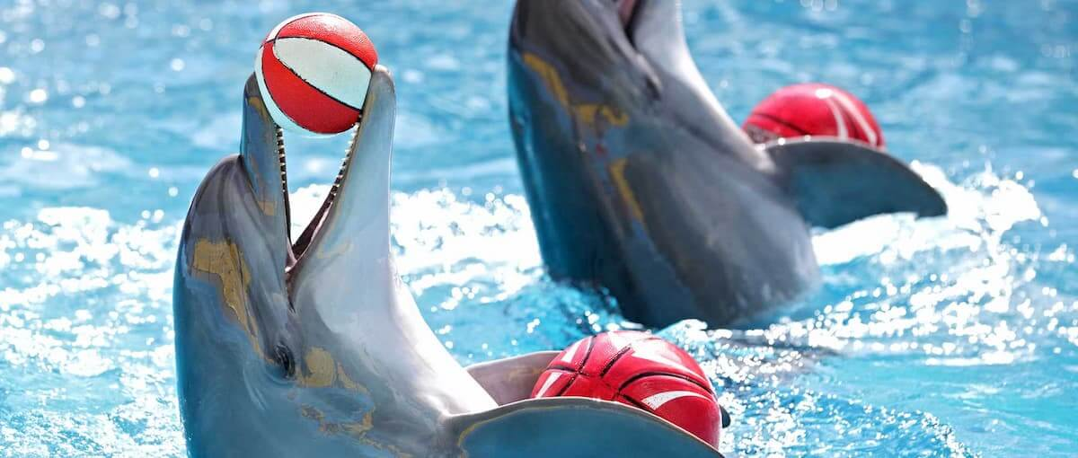 Dolphins playing with balls at Sea World